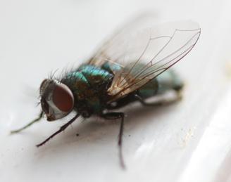 fly_2018
