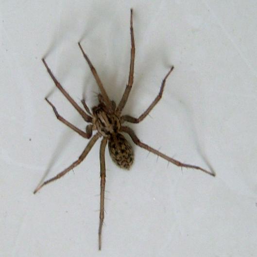 spider_2018